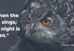 quotes about owl, owl night quotes, owl-themed quotes, owl wisdom quotes,