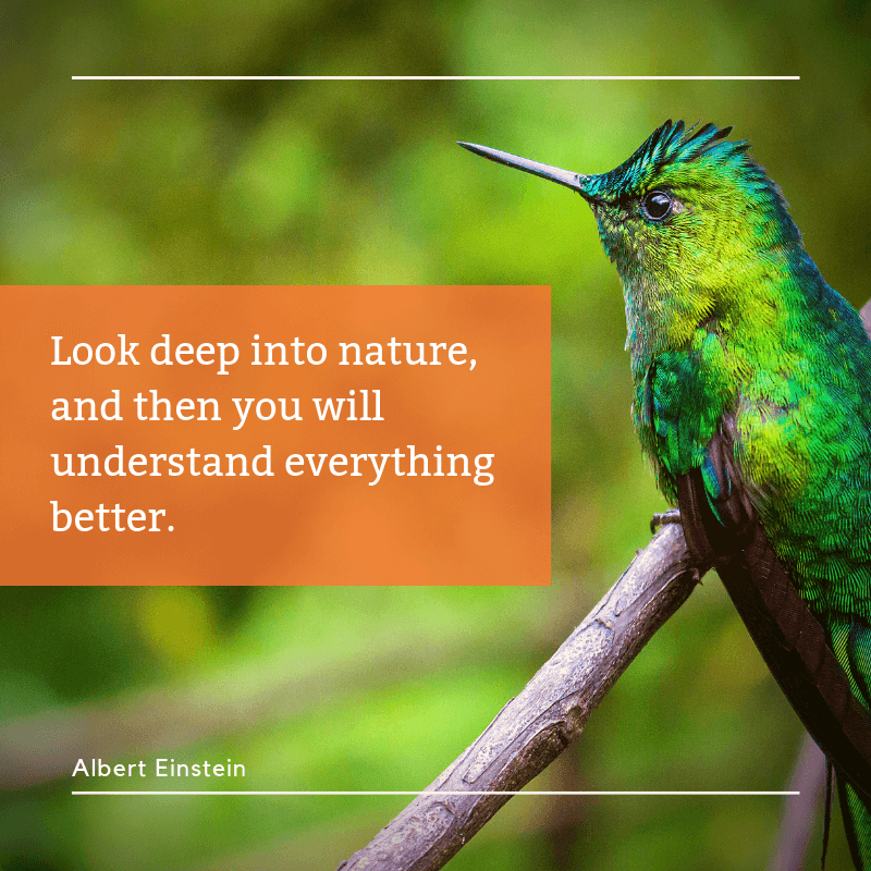 Look deep into nature and then you will understand everything better. - 35 Delicate Quotes about Nature and Love