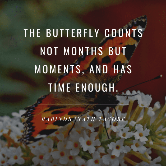 The butterfly counts not months but moments and has time enough - 24 Best Butterfly Quotes That Will Motivate You