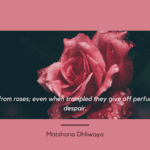 Learn from roses even when trampled they give off perfume not despair. - Get Inspiration and Motivation from 70 Roses Quotes